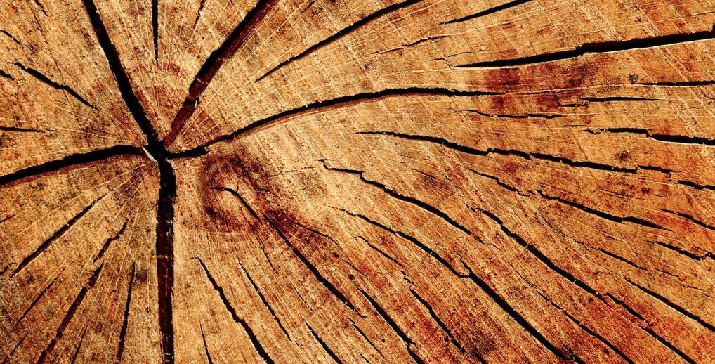monture en bois