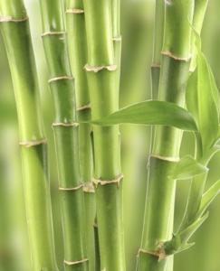 monture en bambou